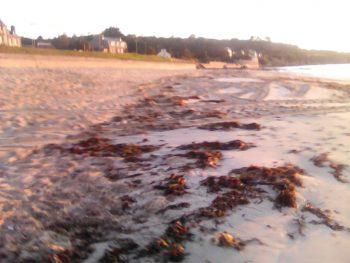 Plage Trez Hir avec laisse de mer